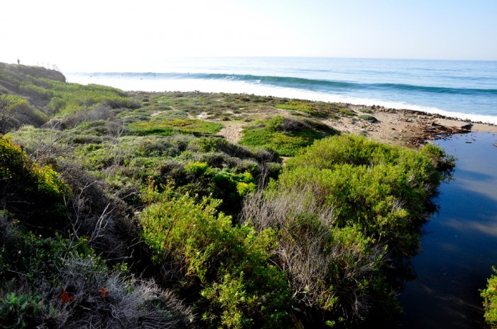 surf co line green